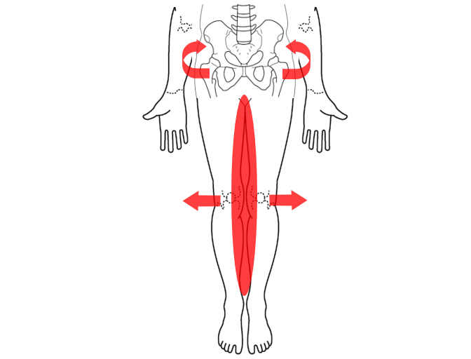 O脚、X脚のタイプ